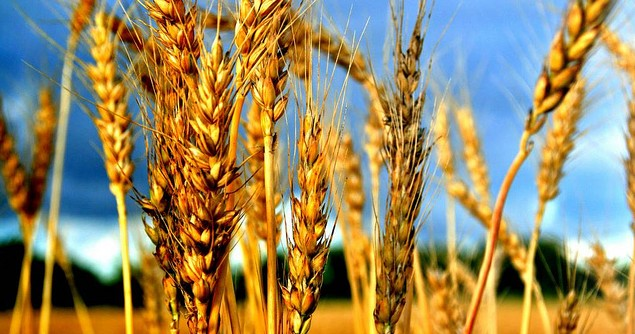 Quelling Future Panic over Global Food Security