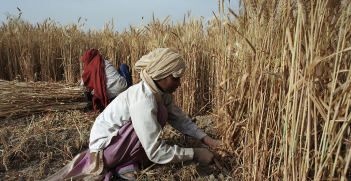 India's rural farmers are likely to play a decisive role in the outcome of the country's elections. Source: World Bank Photo Collection, Flickr, https://bit.ly/1hYHpKw