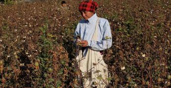 CottonPicker_Uzbekistan. Photo Credit: Chris Shervey (Flickr) Creative Commons