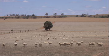 Riverina Drought
