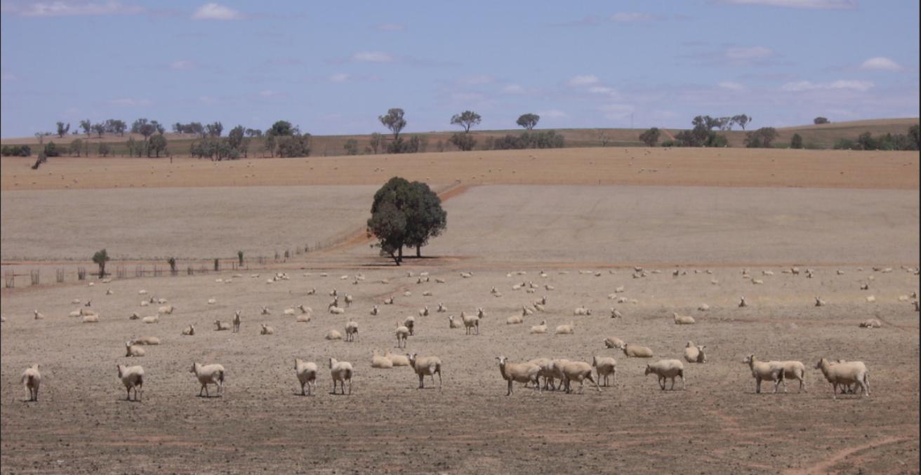 Riverina Drought