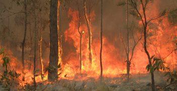 Bush fire at Captain Creek central Queensland, Australia Photo: https://bit.ly/31Kfy0I