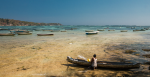 Indonesian Seaweed Skipper. Source: Jannik Reinhold https://bit.ly/3a5iLxK
