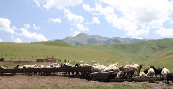 Pasture and cattle in the mountains near Almaty, Kazakhstan. Source: Patrizia Cocca / GEF https://bit.ly/3u9ni9a