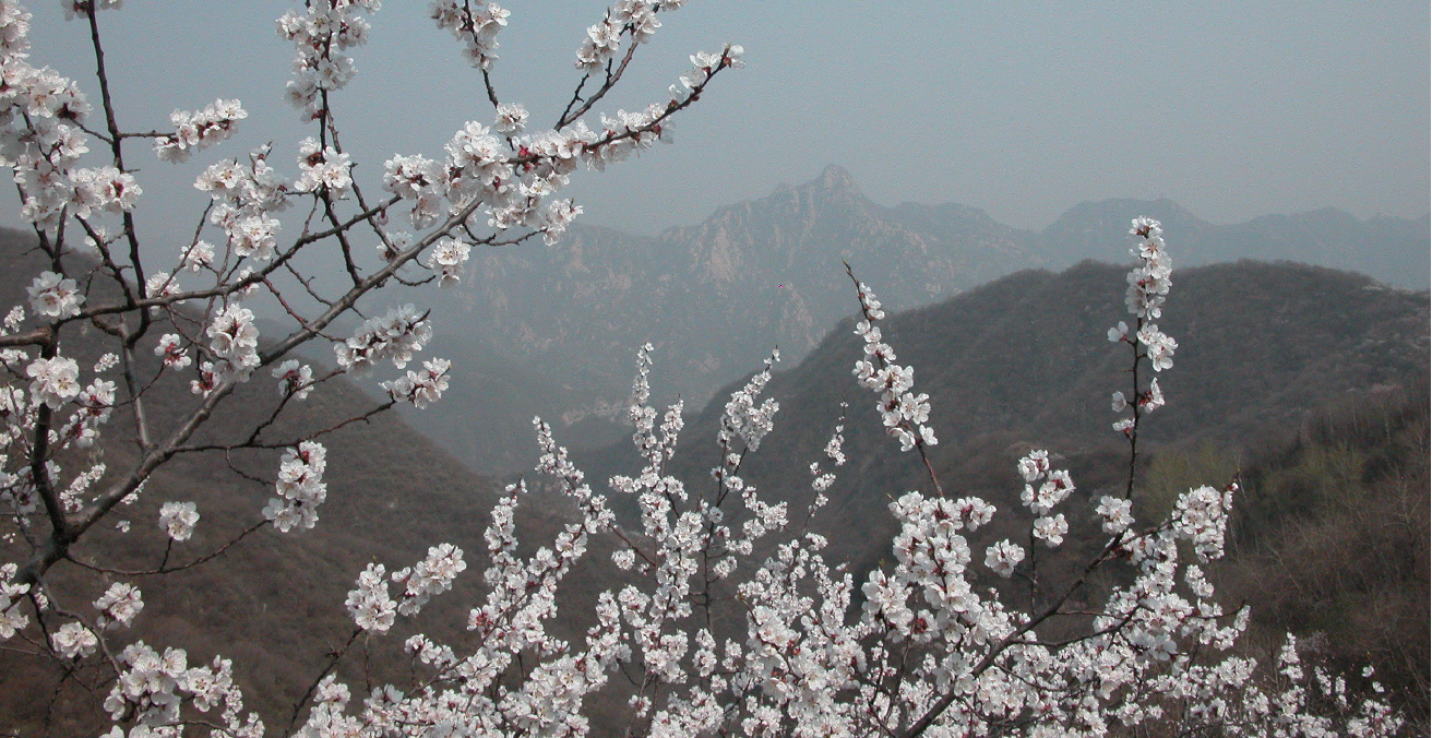 View from the Great Wall of China. Source: Norma Fincher https://bit.ly/2NPXkIh