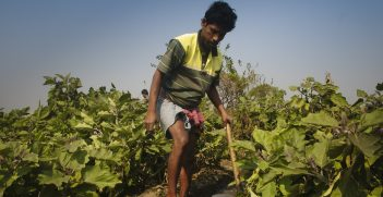 Brinjal cultivation using wastewater. Source:  Water, Land and Ecosystems https://bit.ly/3fc9ExV