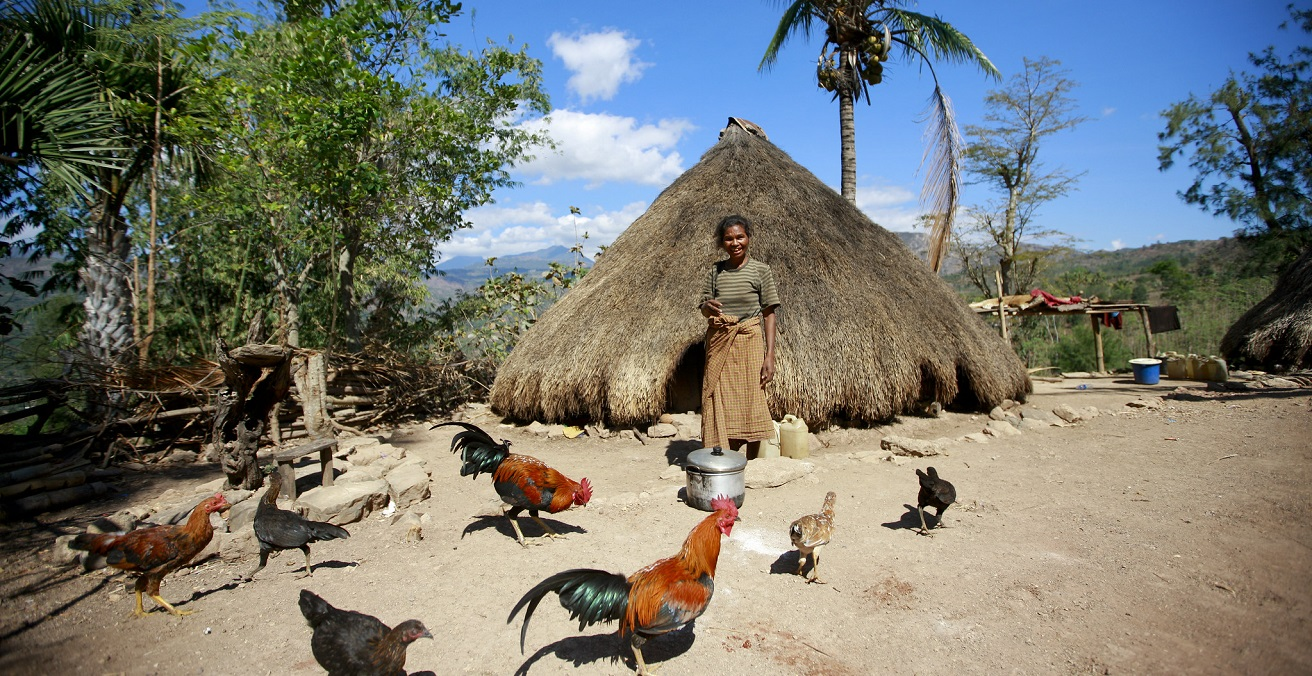 Batista Dos Santos stands in front of her traditional home, surrounded by roosters, in Bertakefe, Timor-Leste. Source: UN Photo/Martine Perret. https://bit.ly/3xcrPJ7